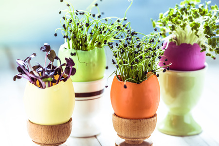 sprout: Growing healthy sprouts in Easter egg shell, dieting concept and easter decoration idea. Stock Photo