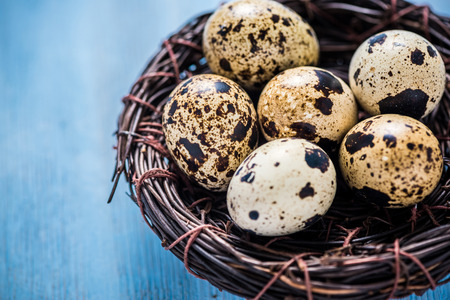 quail nest: Quail eggs in bird nest on wooden table, Easter concept. View from above, space for text.