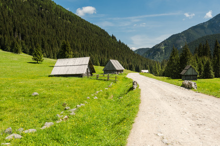 off track: off track road in Chocholowska Valley in Tatra National Park in Poland at summer time