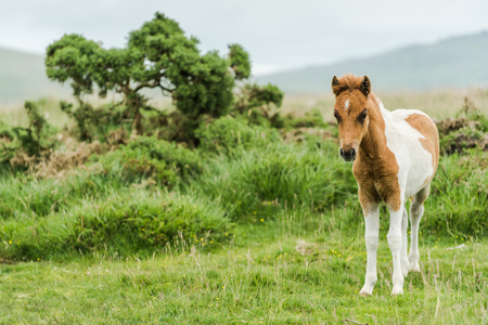 rural area: young wild pony horse in rural area