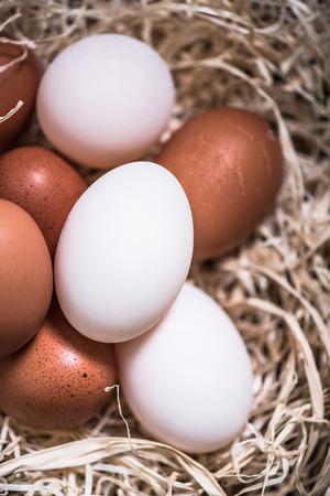 free range: chicken and duck free range eggs in straw nest, farming