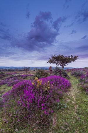heathland: early autumn in countryside and heathland