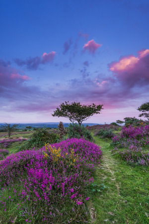 stunning sunset in heathland at late summer and early autumn