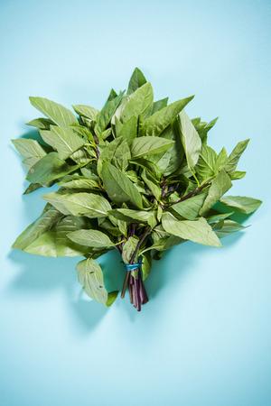 thai basil: Fresh Thai basil herb bunch on bright board Stock Photo