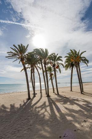 Palm trees on sandy beach and blue sky in Costa Blanca, Spain