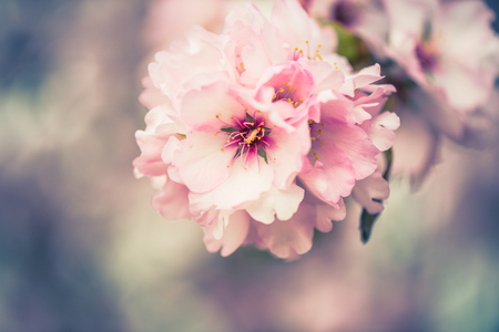 春の花の園。背景をぼかした写真を抽象化します。パステル カラーとトーン効果。枠線と領域をコピーします。