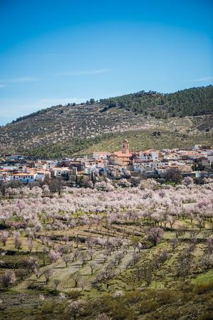 Almond trees blooming in rural parts Sierra Nevada, Spain Stock Photo