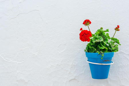 Blue pot with flower on white stone wall, mediterranean background with copy space. Travel concept.