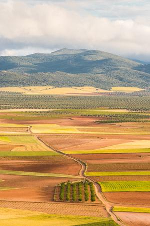 Rural road in fields with summer crop, Spain Stok Fotoğraf