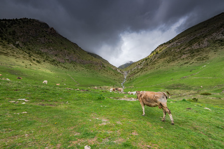 tourism in andorra: Cow pasture in rural Andorra in high Pyrenees mountains