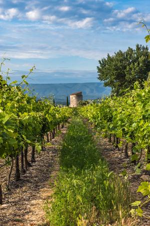 Viñedo en la región de Provenza, Francia Foto de archivo - 80554277