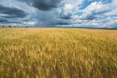 흐린 된 필드 위에 흐린 극적인 하늘, 여름 뇌우 스톡 콘텐츠