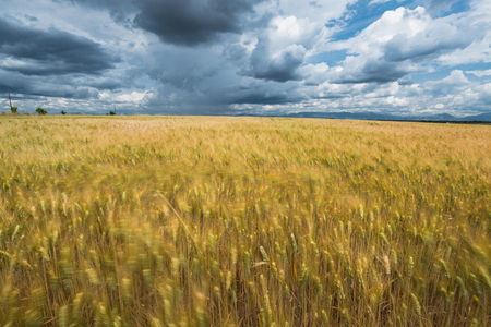 Cloudy dramatic sky over blurred fields, summer thunderstorm