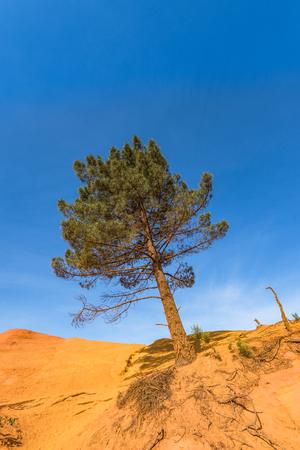 Groene boom op rode rots, Frankrijk.