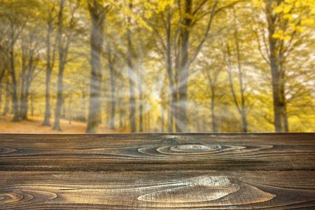 製品の表示やモンタージュの木製ボードと秋の森