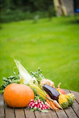 Freshly picked vegetables on garden table, copy space on soft focus grac in background Zdjęcie Seryjne