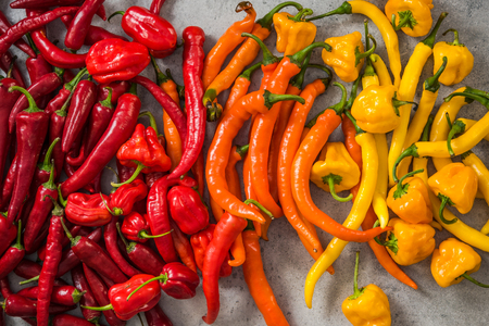 Colorful vibrant hot chili peppers . Stock Photo