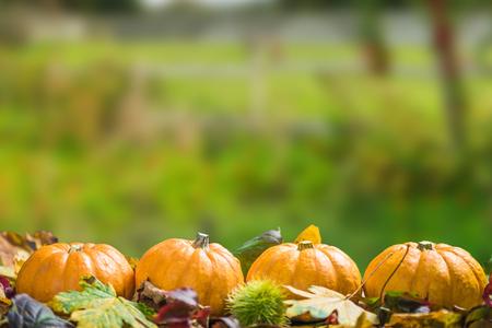 Fall Thanksgiving or Halloween pumpkins, fall background