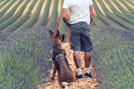 Couple travellers in lavender fields in Provence.