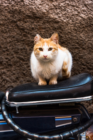 Cat sitting on bike in backstreet while looking at camera Фото со стока - 95142806