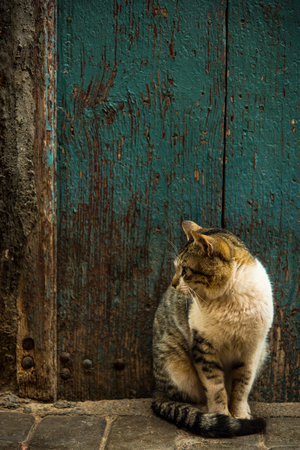 Cat sitting in old street in Morocco. Фото со стока - 95057639