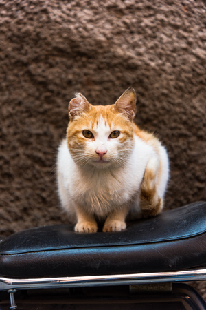 Cat sitting on bike in backstreet while looking at camera Фото со стока - 94724186