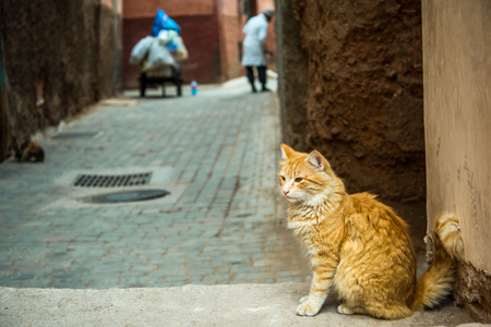Ginger cat sitting in back alley of Morocco. Фото со стока