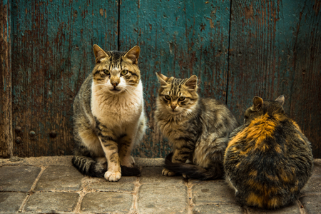 Group of stray cats at front door in Morocco. Zdjęcie Seryjne