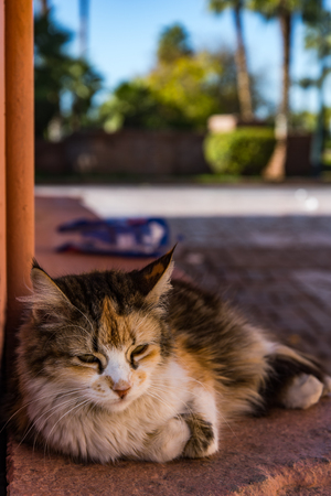Cat resting beside red painted wall in Morocco.
