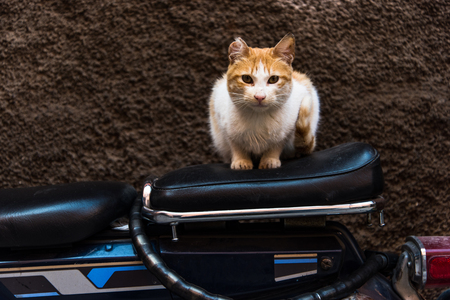 Cat sitting on bike in backstreet while looking at camera