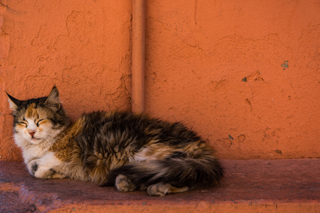 Stray cat sleep beside red wall in Morocco Stock Photo