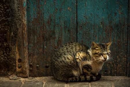Cat resting beside old wooden door in Morocco. Banque d'images