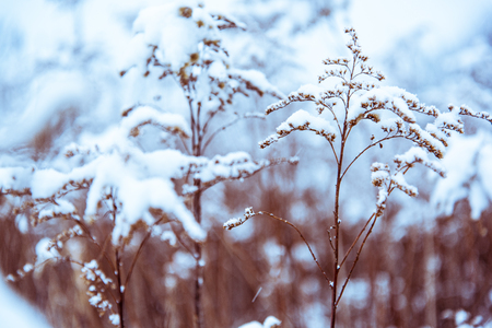 Filtered and toned winter background. Zdjęcie Seryjne