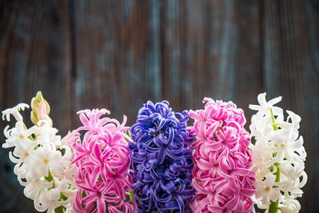 Hyacinth heads flowering, border background.