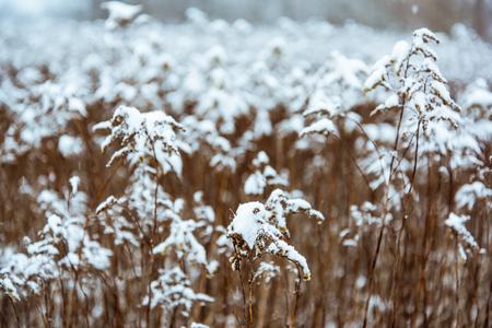 Toned abstract image of winter wonderland. Banco de Imagens