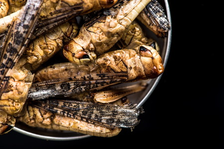 Edible grasshoppers crickets in pot with dark copy space