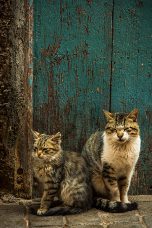 Two lovely cats sitting at fron door in Morocco Фото со стока - 95816845