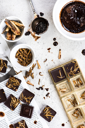 Making chocolate with edible insects. Culinary trends 写真素材