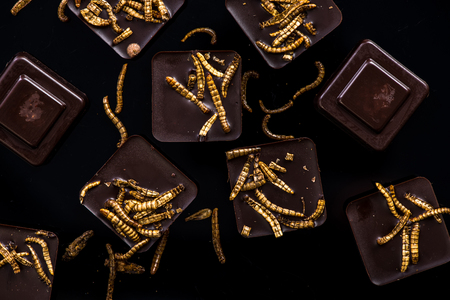 Chocolate with edible worms, culinary trends. 写真素材