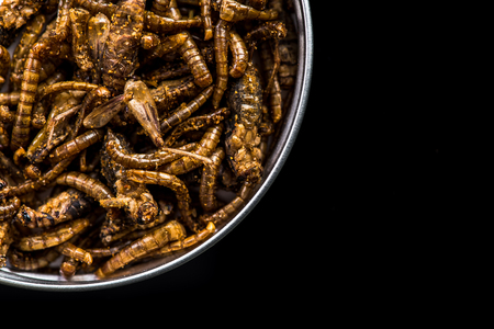 Edible fried worms in pot on dark copy space.