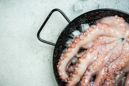 Seafood fresh whole octopus, copy space Imagens
