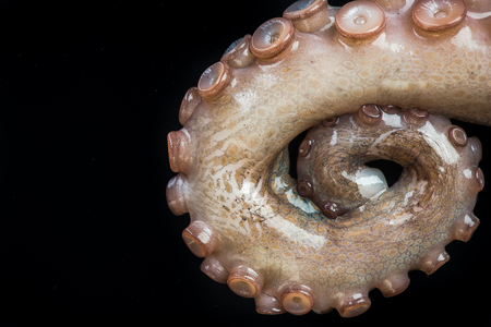 Octopus tentacles closeup detail view.