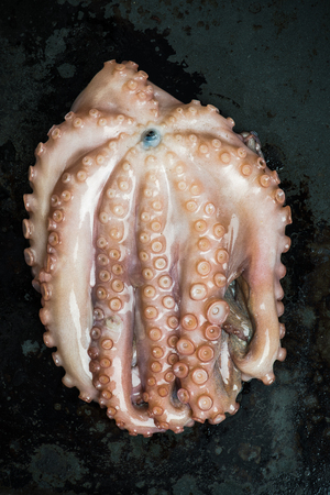 Whole raw octopus seafood , top view
