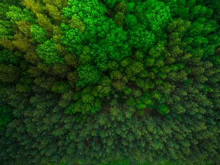 Colorful trees in spring forest,top down aerial. Stockfoto