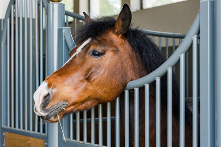 Horse head profile shoot at stable gate. Standard-Bild - 102623481