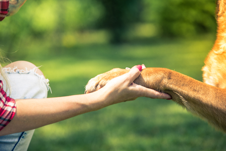 woman hold dog paw,friendship and love concept. Stock Photo