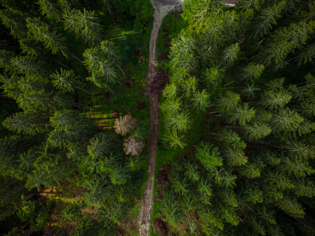 Dirt track road in forest,aerial drone view.