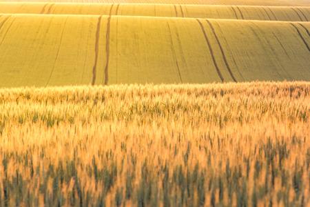 Golden sunrise over wheat fields.