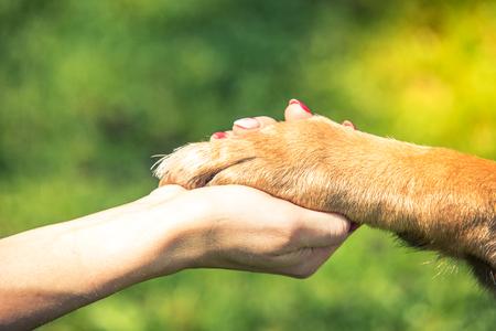 Hand hält Hundepfote, Beziehung und Liebeskonzept. Standard-Bild