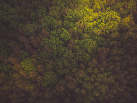 Toned aerial image of wild forest.